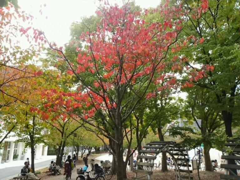 江坂公園紅葉