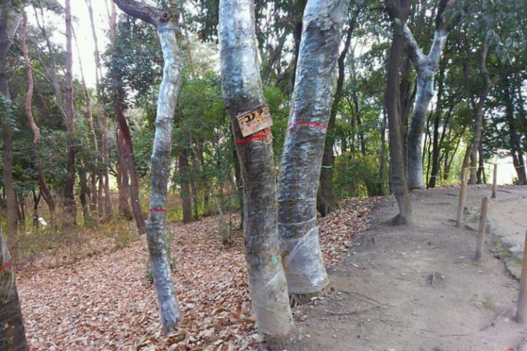 ラップ巻き木①