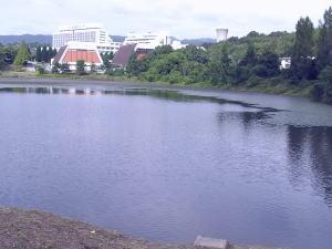 北千里公園池