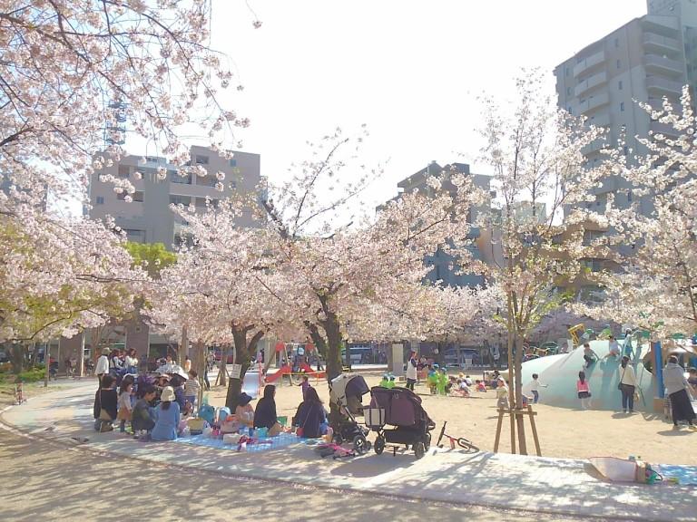 江坂公園桜